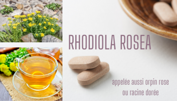 RHODIOLA-ROSEA-1