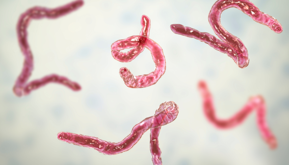 parasites photo blog